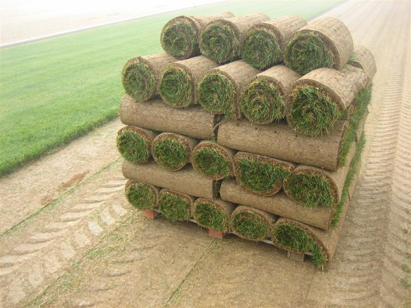 San Diego Sod Farm Sod Delivered Daily 760 789 8010