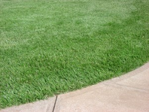 Performance Tall Fescue